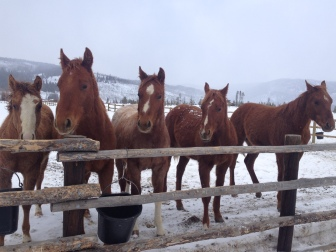One-year old babies at the ranch last week.