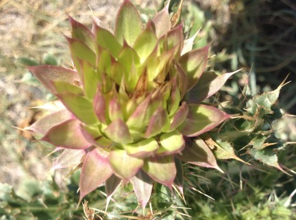 This is a cactus-like weed I walked by in the park with my hot dogs. Unassuming and beautiful.